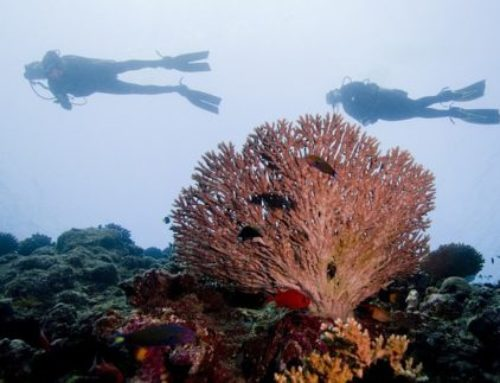 Scuba Diving & Snorkelling in Madagascar