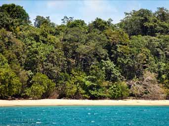 Madagascar Island primary rain forest area Masoala Peninsula